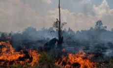 The World's Forests are on Fire